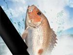 фънски игра Морски риболов